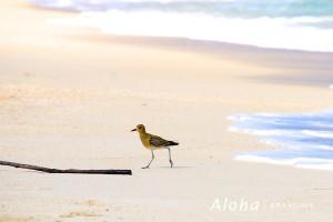 birdwalk600