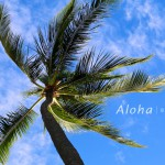 palmtree1000