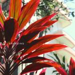 redplant1000