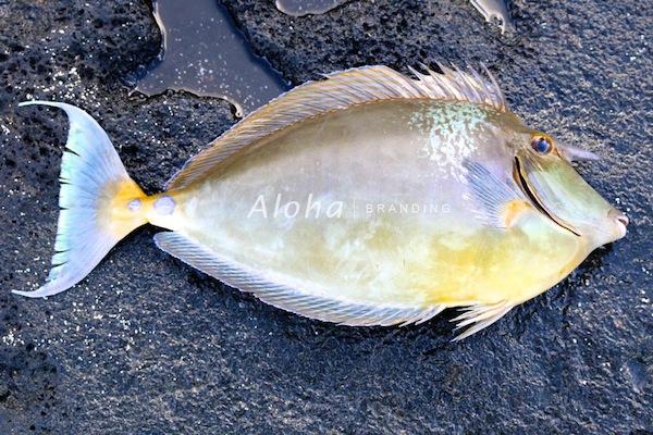 fishtengu