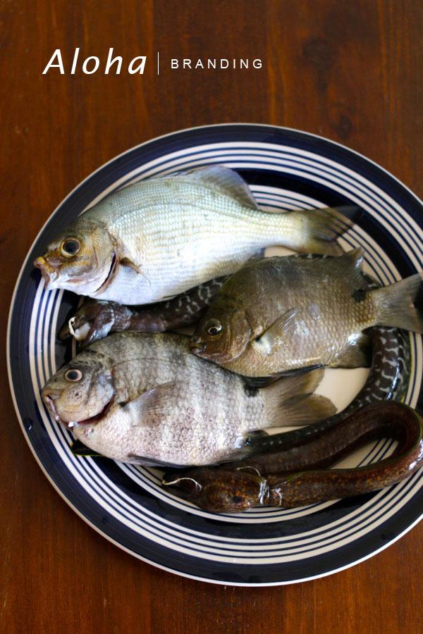 fish21000