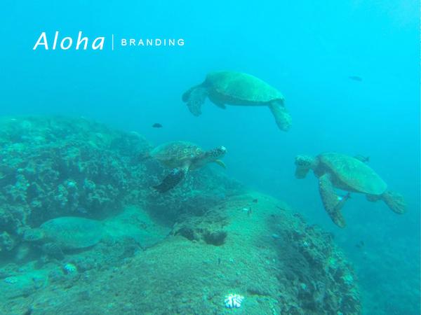 Honu at Makaha Beach
